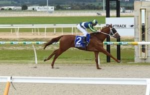El Sicario (NZ) wins EquineTrain Centre 3YO Maiden Plate at Racing.com Park on September 01, 2016